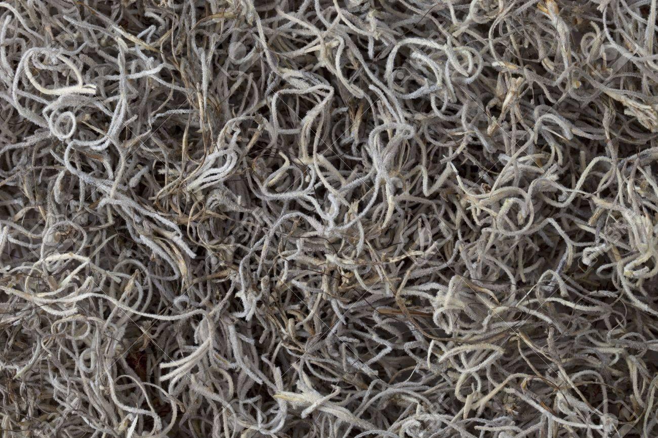 Muschio Spagnolo (spanish moss)